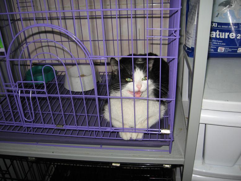 гостиница для кошек и собак